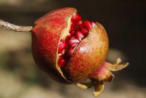pomegranate-185456_640